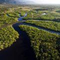 آمازون بزرگ ترین جنگل بارانی جهان